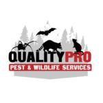 White Plains Wildlife Removal